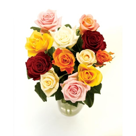 Image of 12 Classic Mixed Roses