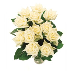 Send white roses buy white roses by post a rose meaning of white send white roses buy white roses by post a rose meaning of white roses mightylinksfo