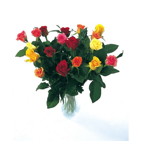 18 Classic Mixed Roses