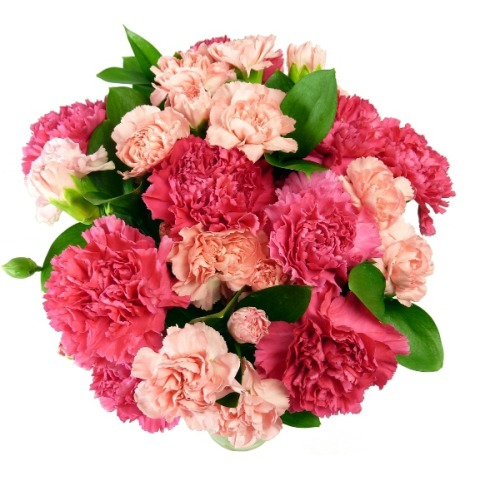 16 Pink Carnations Free Uk Delivery For Mothers Day Post A Rose Mothering Sunday Flowers Under 20