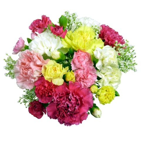 313c5f311447 12 Classic Carnations in Assorted Colours