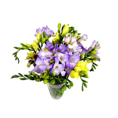 Image of 15 Assorted Freesia
