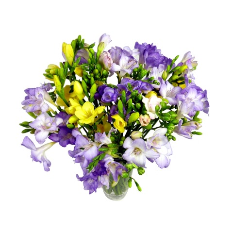Image of 25 Assorted Freesia