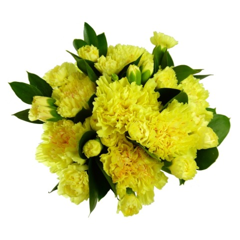 12 yellow carnations free uk delivery post a rose online flowers 12 yellow carnations free uk delivery post a rose online flowers send roses and flowers mightylinksfo