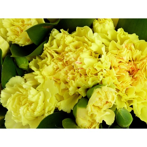 16 yellow carnations free uk delivery post a rose online flowers yellow carnations yellow carnations mightylinksfo