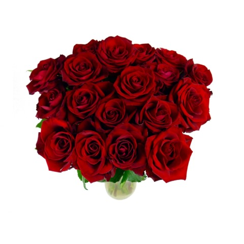 Image of 18 Select Red Roses