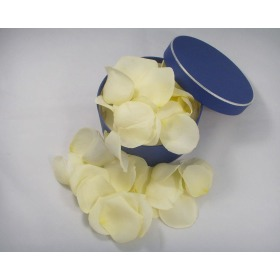 Fresh Cream Rose Petals